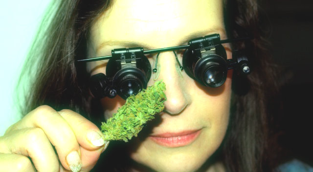 using a magnifier to inspect the marijuana you're about to buy